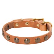 Leather Dog Collar with Brass Half-Ball Studs