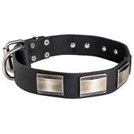 Leather Dog Collar Massive Nickel Plates