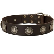 Leather Dog Collar Decorated with Silver Conchos