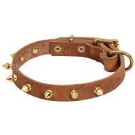 Walking Designer Leather Dog Collar with Brass Spikes