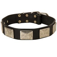 Leather Dog Collar with Large Nickel Plates