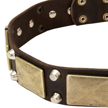 Leather Dog Collar with Nickel Studs