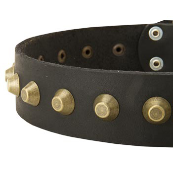 Leather Dog Collar with Brass Pyramids for Dog