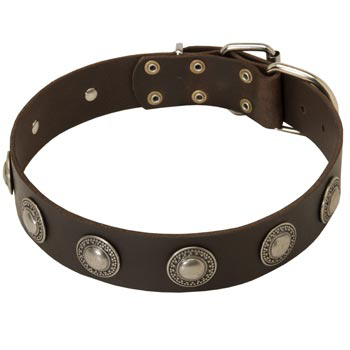 Training Leather   Dog Collar for Stylish Dogs