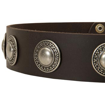 Leather Dog Collar with Conchos for   Dog