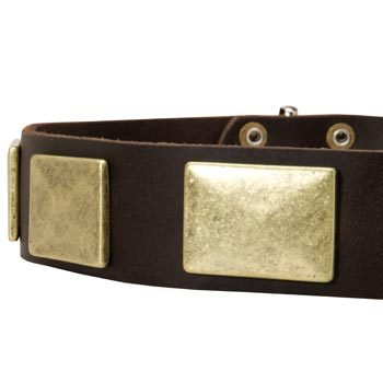 Leather Dog Collar with Massive Brass Plates for Dog