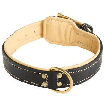 Leather Dog Collar Padded for Dog Off Leash Training