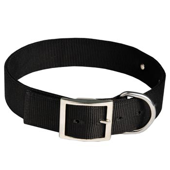 Dog Training Collar with ID Tag