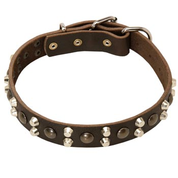 Leather Collar for Dog Stylish Walks