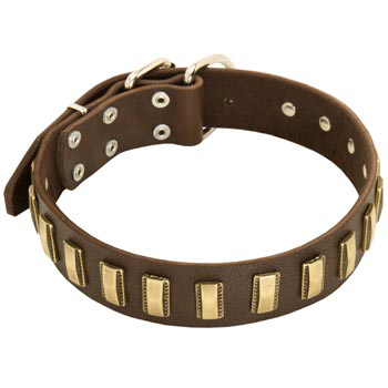 Leather Dog Collar with Adornment for Dog