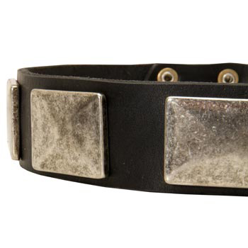 Wide Leather Dog Collar for Walking