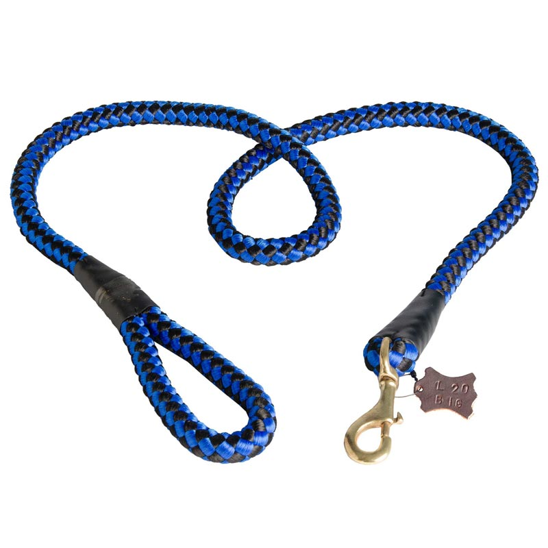 Lose The Leash Dog Training