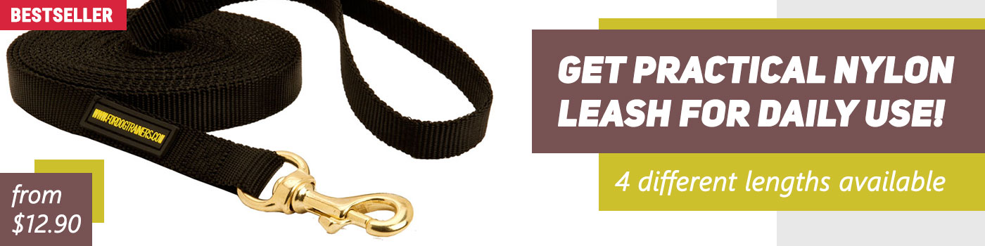 Nylon Dog Leash for Tracking and Training